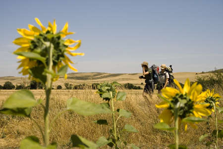 A lot of Sunflowers in spanish countryside Stock Photo - 13909944