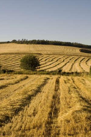 threshing: Way of St. James, Spanish countryside in the summer Stock Photo