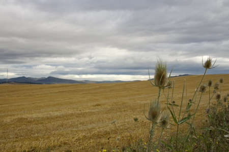View of the Spanish countryside in the summer photo