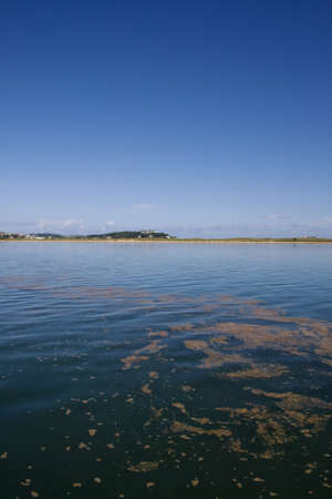 cantabrian: View of Polluted sea, in the Cantabrian sea