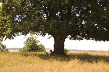 under the tree: Chica de lectura bajo el �rbol, el campo espa�ol