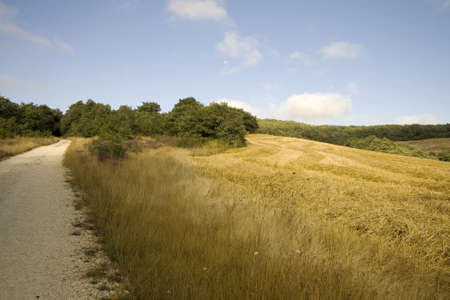 Way of St. James, Spanish countryside in the summer photo