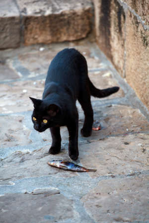 Black cat eating a dead fish in the street photo