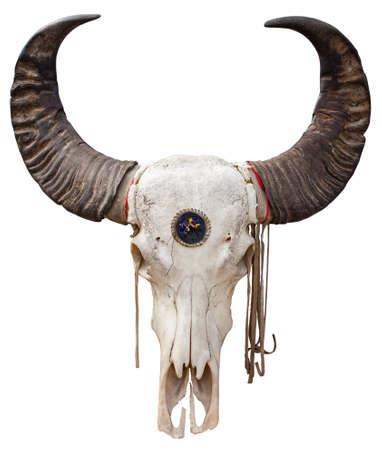 animal skull: Close up of a Buffalo skull isolated on white background Stock Photo