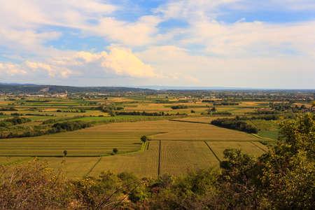 View of cornfield in the Friuli Venezia Giulia countryside photo