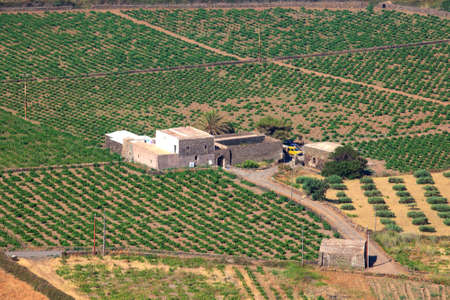 View of zibibbo Plantation in Pantelleria, Sicily photo