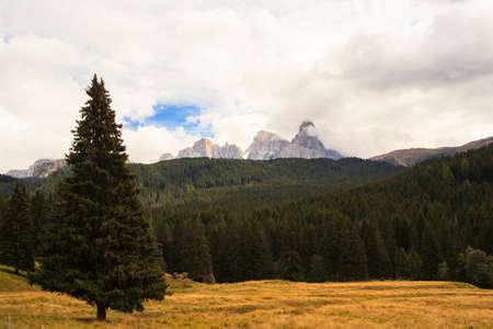 View of the Paneveggio park, Trenntino Alto Adige photo