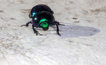 microcosm: View of green beatle on the rock Stock Photo