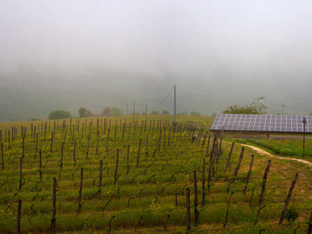 voltaic: voltaic panels in the vineyard Stock Photo