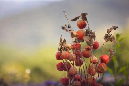 flores secas: Close up de flores secas en el jard�n
