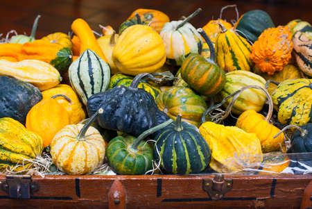 canada agriculture: Pumpkins Stock Photo
