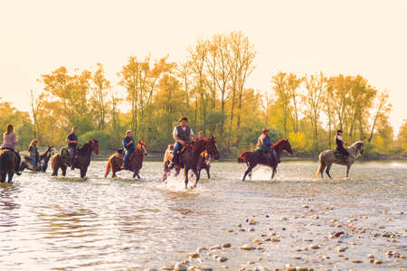 View of horses in the Ticino river, Italy