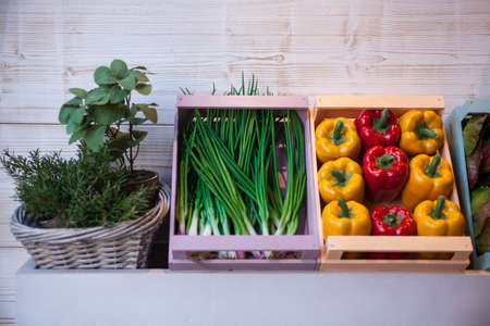 herbs boxes: View of variuos vegetables inside the wooden boxes