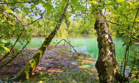 vegetal: View of the river in the site of Palù di Livenza, Pordenone. Italy