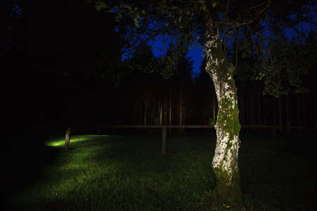 torch light: Tree in the evening illuminated with a torch. Light painting technique