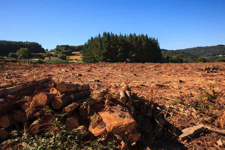 deforested: View of the deforestation in the spanish forest Stock Photo