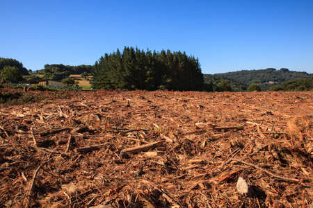 View of the deforestation in the spanish forest Standard-Bild
