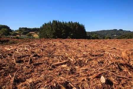 Uitzicht op de ontbossing in de Spaanse bos Stockfoto