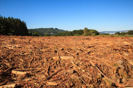 View of the deforestation in the spanish forest Reklamní fotografie