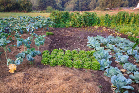 View of vegetables domestic garden in Spain Stock Photo