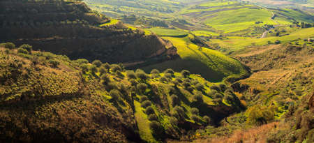 View of olive grove in the sicilian countryside Stock Photo