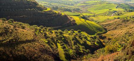 arboleda: View of olive grove in the sicilian countryside Foto de archivo