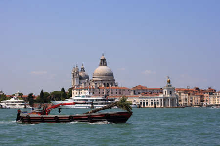 VENICE, ITALY - JUNE, 07:  Boat transporting palm tree on Canal Grande on June 07, 2009 Editorial