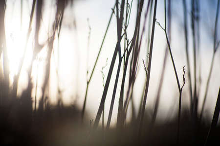Close up of dried countryside plants at sunset