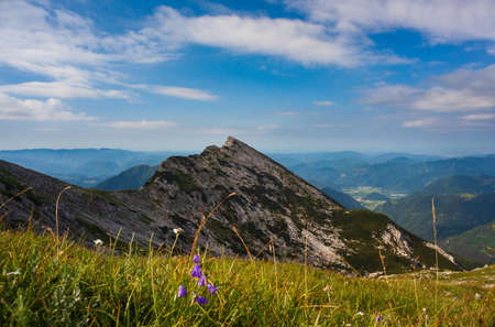 View of bellflower in the background the Vogel mountain, Slovenia