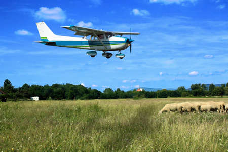 Light general aviation plane on final over sheeps Stock Photo