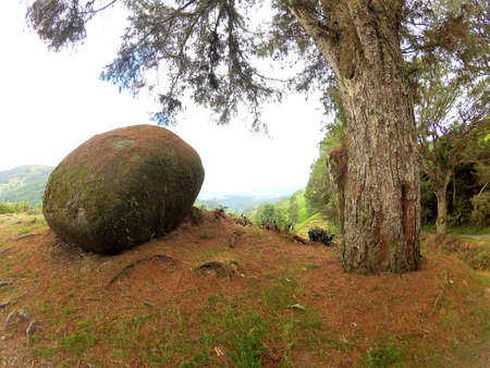 Big stone and tree together on the mountain Foto de archivo