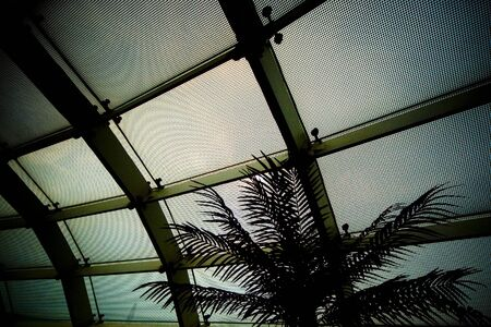 charles de gaulle: A palm silloutted against the moire pattern of the windows in Charles de Gaulle aiport.