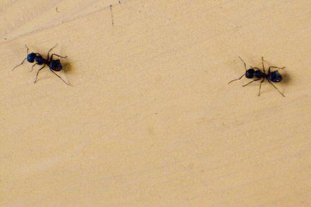 Ants marching across the floor. Stock Photo - 548200