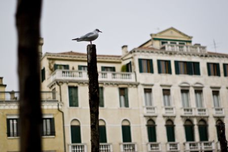 piling: Sea gull sitting on a piling in Venice. Stock Photo