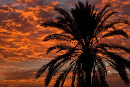 med: A palm silhouetted in sunset along the beach on the med in Barcelona.