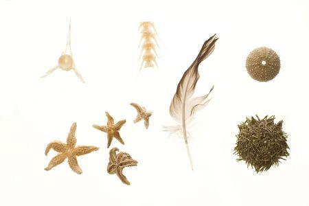 Results of beachcombing: sea urchin, starfish, feather, bones, mix.