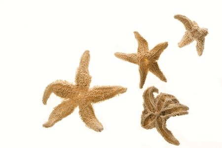 beachcombing: Four dried starfish isolated on a white background.  Stock Photo