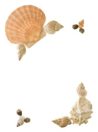 inmejorablemente: Shell rincones ideales para hacer de las fronteras en una p�gina con temas tropicales. Foto de archivo
