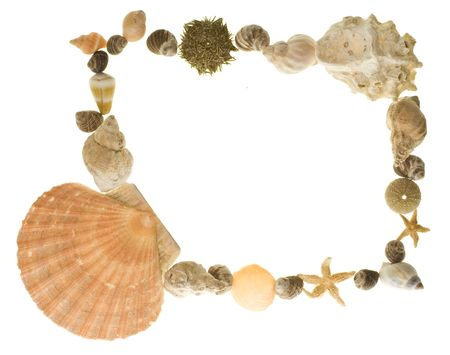 beachcombing: A border made of various shells of sea creatures, ideally suited to scrapbooking.