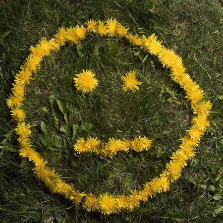 neutral face: A neutral face, without positive or negative, created in dandelions on a lawn.  Stock Photo