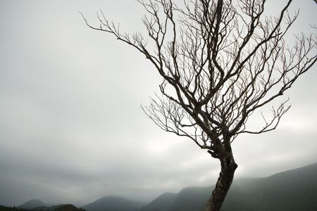 A gnarly tree standing strong before the Long Range mountains in Western Newfoundland.  写真素材