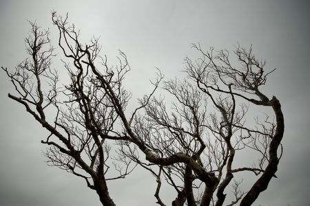 Close up on a gnarly tree silhouetted on a cloudy sky.