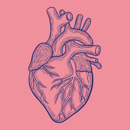 Hand drawn vector anatomic heart, blue outlines isolated on pink background