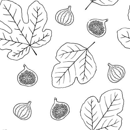 Hand drawn vector black and white outline fig seamless pattern Ilustrace