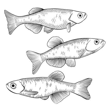 Hand drawn vector black and white outline fish isolated on white background