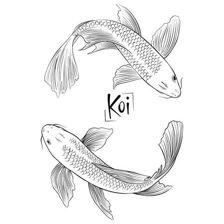 Hand drawn outline vector couple of koi fish. Ilustrace