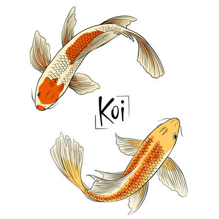 Hand drawn vector couple of koi fish isolated on white background.