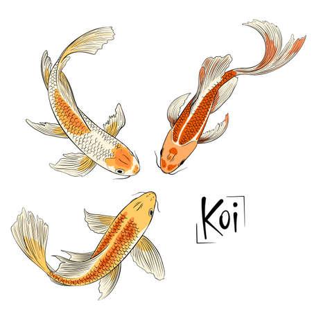 Trio di vettore disegnato a mano di pesce koi isolato Vettoriali