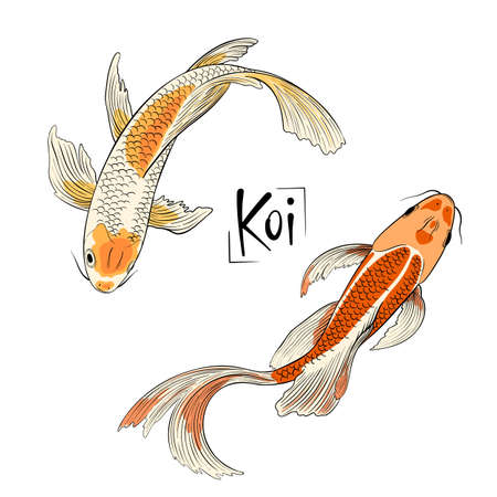 Hand drawn vector couple of koi fish isolated Ilustrace