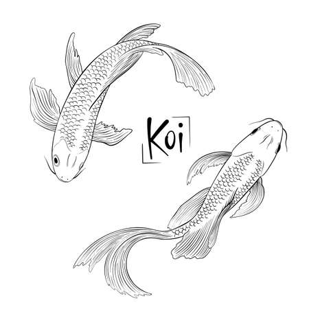 Hand drawn outline vector couple of koi fish isolated Ilustrace